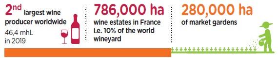 French market - SITEVI