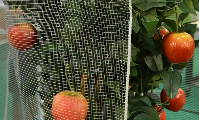 Key figures for the fruit and vegetables industry