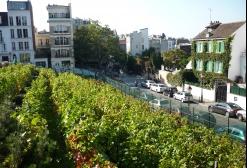 Photo des vignes de Montmartre